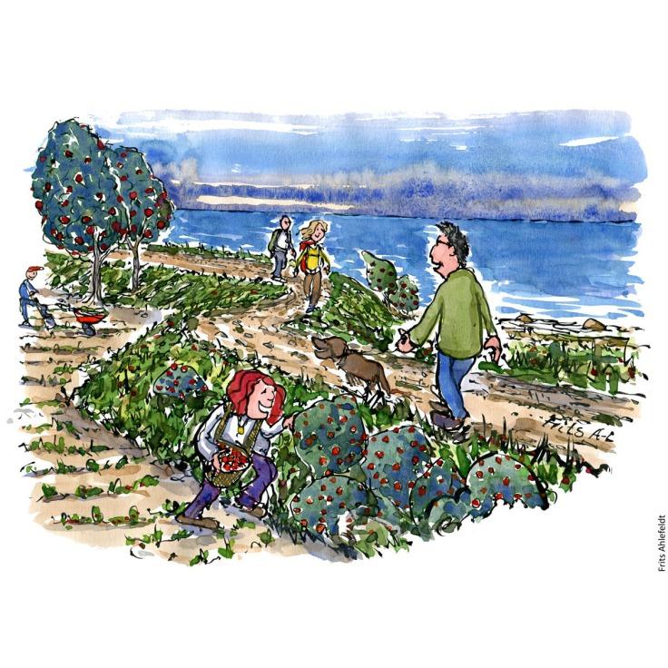 Illustration af sti langs havet, vandrere og en der plukker vild mad. Tegning af Frits Ahlefeldt