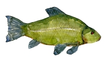 illustration af Suder ferskvandsfisk