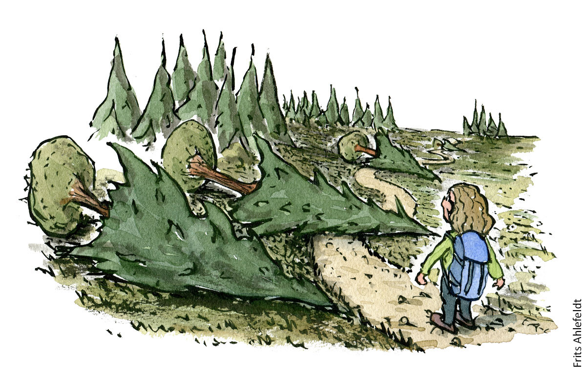 Illustration af vandrer ved sti hvor der er faldet træer ned. vandrestier design og vedligeholdelse. Tegning af Frits Ahlefeldt